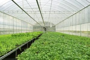 Lưới chắn côn trùng – Giải pháp cho ngành nông nghiệp công nghệ cao